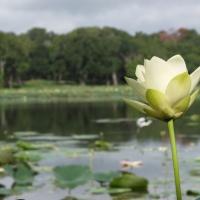Texas Park Gem: Brazos Bend State Park