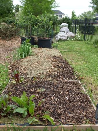 A growing garden, lasagna style