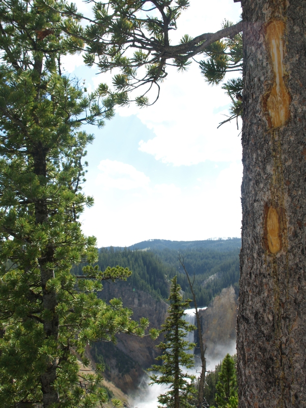 Peek-a-boo Falls - The iconic Lower Falls on the way down to the overlook, Yellowstone, WY