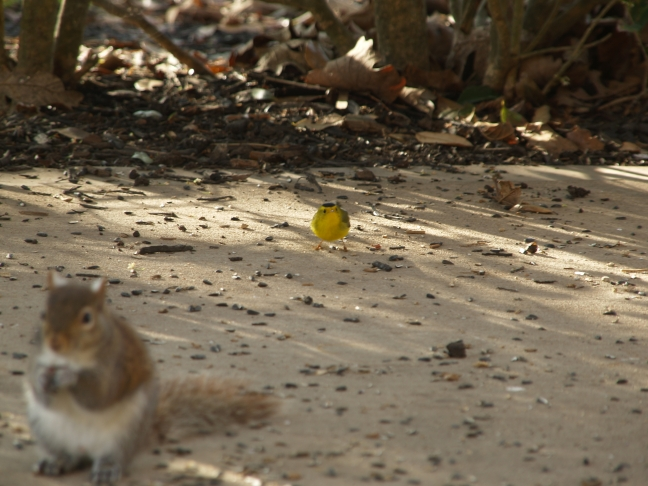 Tweety and Mr. Squirrel