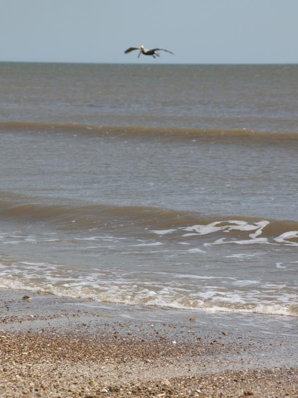 Pelican Flyover