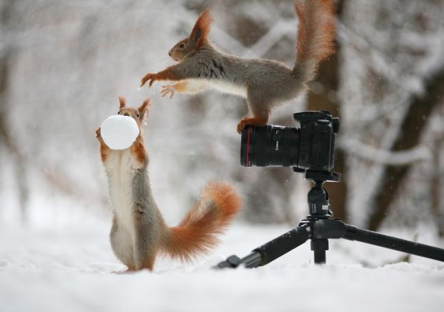 Squirrel_Snow1