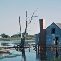Ghost Birds: When Flooding Makes A Ghost Town