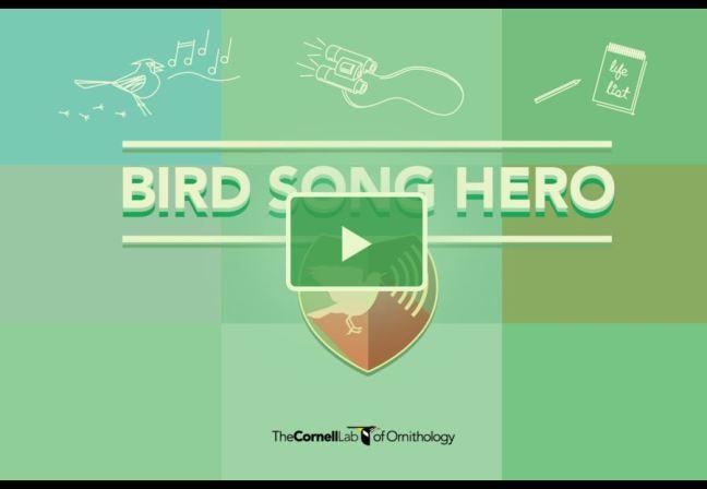 Bird_Song_Hero