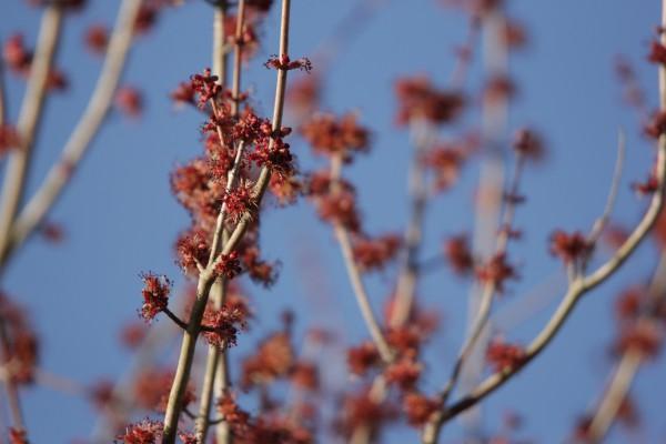 Tree_Bud