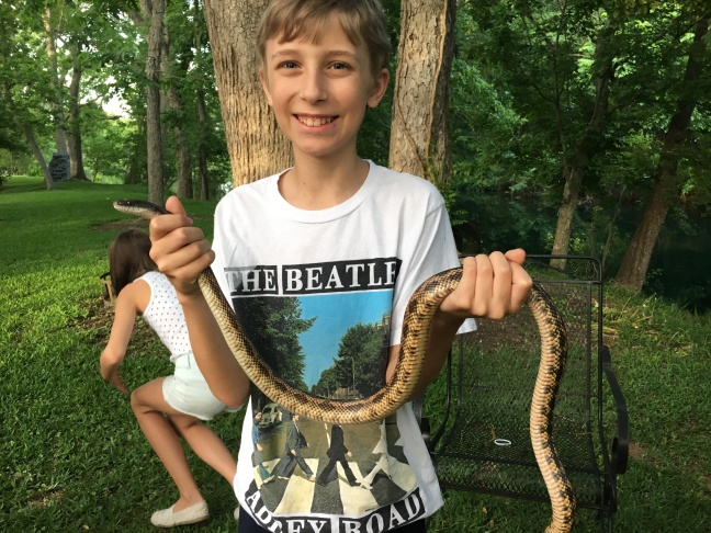 Rat_Snake