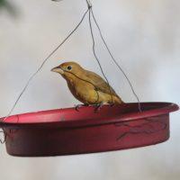 Yard-birding: Break In The Chaos