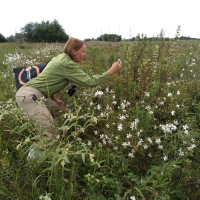 Lessons From The Coastal Prairie