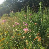 Pocket Prairie: Helping Our Neighbors, Healing Our Minds
